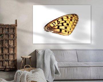 Vlindervleugel van Douwe Schut