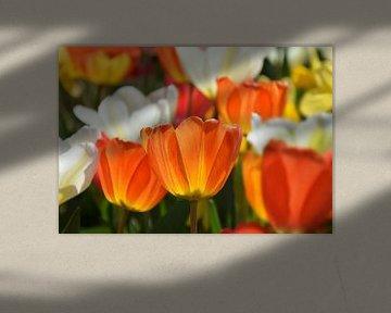 Tulpen-Frühling von Markus Jerko