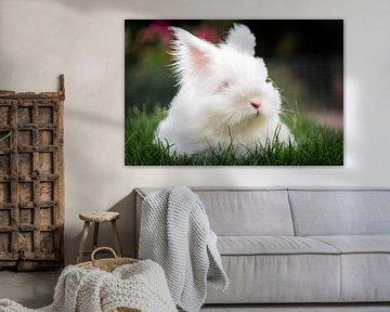 Un lapin dans un zoo pour enfants sur Jeroen Mikkers