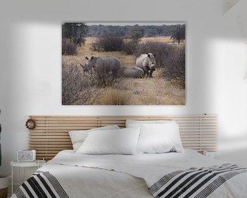 Nashörner in Botswana von Job Moerland