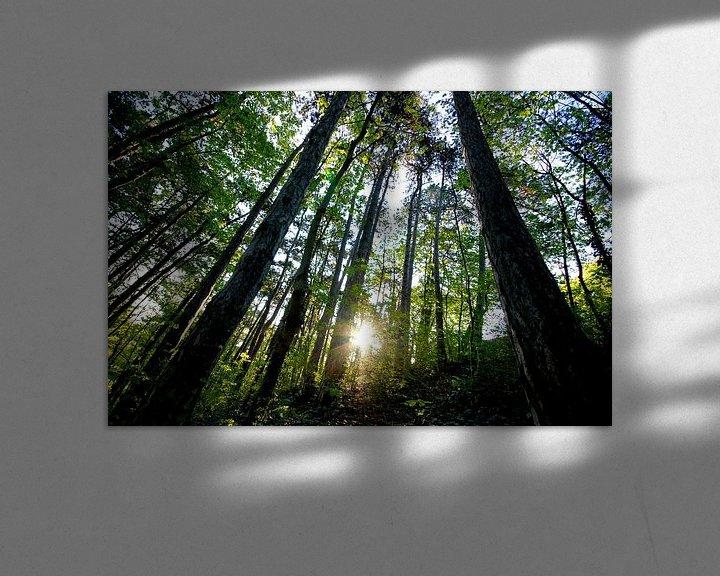 Beispiel: Wald von Markus Jerko