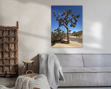 Joshua Tree von Marek Bednarek