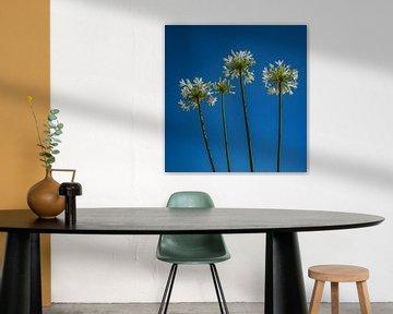 Flowers in the sky van Evelien van der Horst
