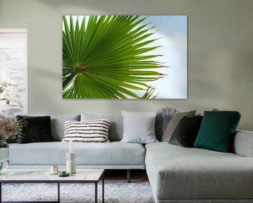 Feuille de palmier verte d'en bas contre le ciel bleu avec des nuages, fond de nature, espace de cop