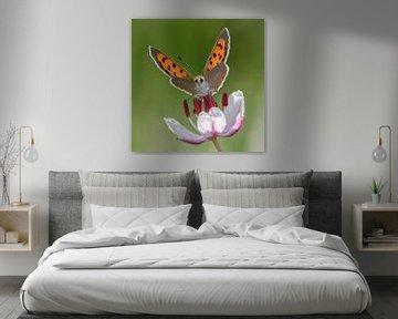 kleiner Schmetterling von renata de wit