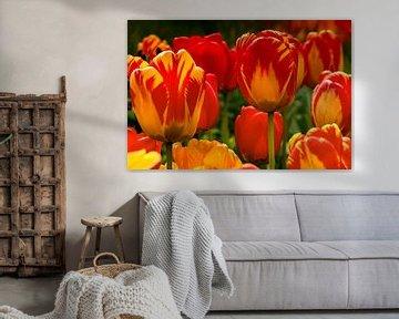 Tulpen von ihrer besten Seite von Foto Amsterdam / Peter Bartelings
