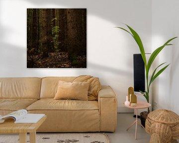 Jonge groene beukenbladeren tussen oude boomstammen in een donker bos, kopieerruimte, geselecteerde  van Maren Winter