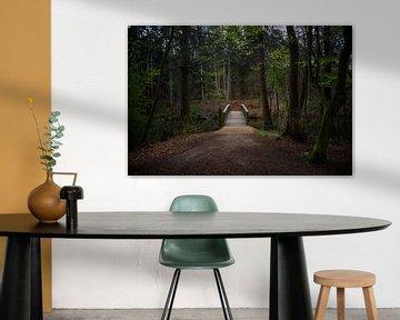 Houten brug leidt over een rivier in een gemengd naaldbos met donkere beukenboomstammen en de eerste van Maren Winter