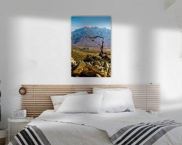 Socotra - Analoge fotografie! van Tom River Art