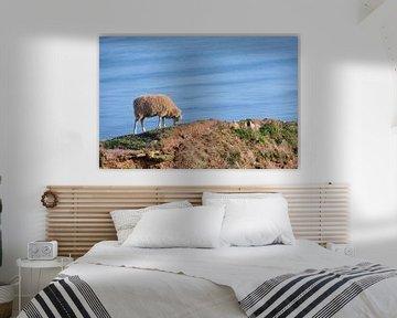 wollige schapen grazen op de klif hoog boven de zee op het eiland Helgoland, Duitsland, kopieerruimt van Maren Winter