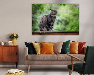 schattige tabby kat zit op een tuintafel tegen een groene achtergrond met kopieerruimte, geselecteer van Maren Winter