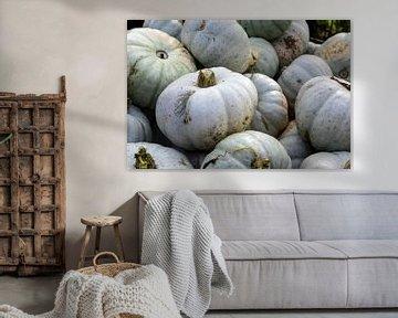 Haufen grauer Kürbisse auf einem Bauernmarkt, dekoratives Herbstgemüse für Halloween und Danksagung, von Maren Winter