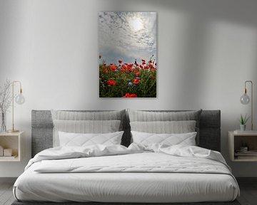 Mohnblumen im  Gegenlicht von Ostsee Bilder