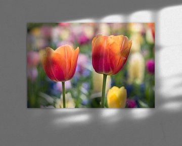 Tulpen von Monique de Koning