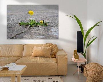 une seule fleur de pissenlit se fraye un chemin à travers le béton, le pouvoir conceptuel de la natu