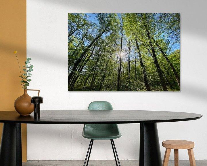 Beispiel: Wald im Gegenlicht von Markus Jerko