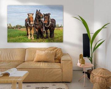 Trekpaarden ploegen