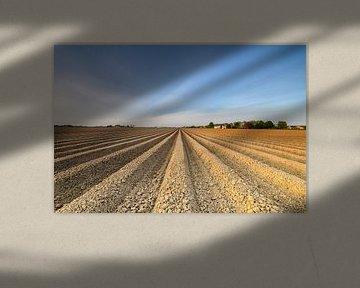 Champ de pommes de terre fraîchement labouré avec un motif en ligne droite et une perspective qui s' sur Sjoerd van der Wal