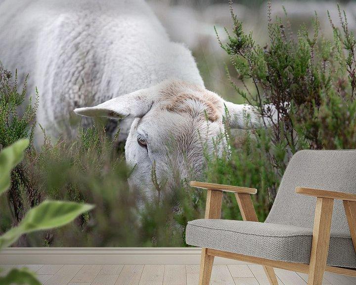 Sfeerimpressie behang: Schaap in de heide aan het grazen van Anita Visschers