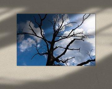 Silhouet van boom in de Veluwe