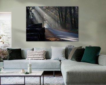Des faisceaux de lumière à travers les arbres