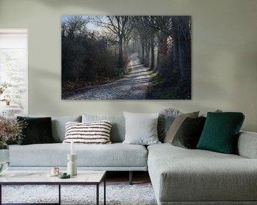 route rurale sinueuse avec un pavé et de vieux arbres au bord de la route dans une lumière froide d'