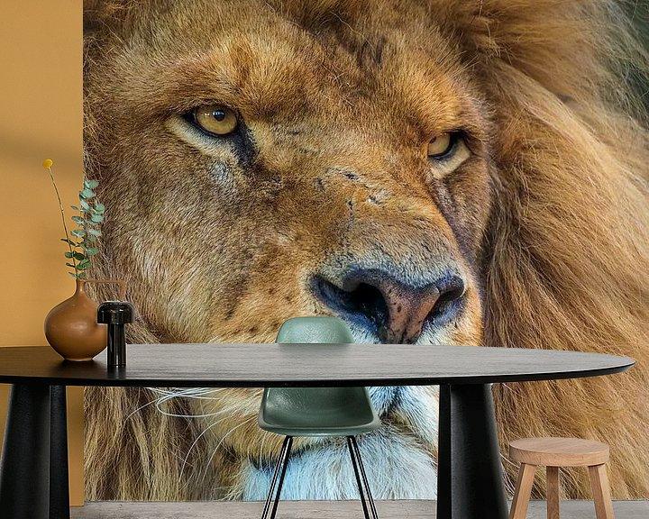 Beispiel fototapete: Porträt eines afrikanischen Löwen von Eye to Eye Xperience By Mris & Fred