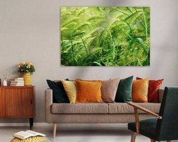 Champ d'orge vert et ensoleillé, concept abstrait de fond de nature pour l'agriculture et la nutriti sur Maren Winter