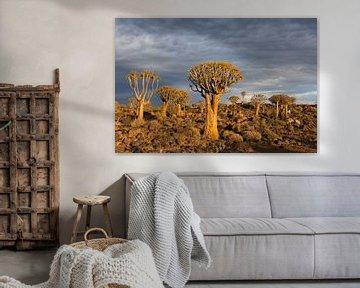 Kocherbäume bei Sonnenaufgang von Felix Sedney