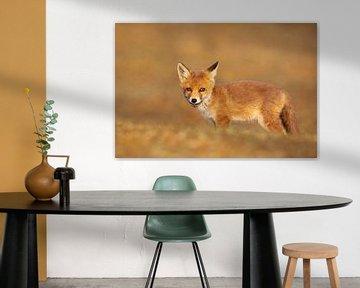 Jonge vos van Aland De Wit
