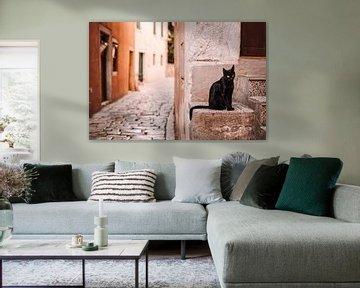 Zwarte kat in de straten van Rovinj, Kroatië. van Rebecca Gruppen