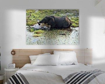 Elefant in den Gewässern des Chobe-Nationalparks von Merijn Loch