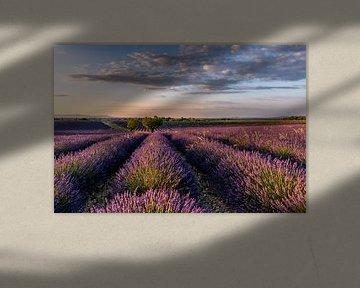 Lavendelbloesem in Zuid-Frankrijk van Achim Thomae