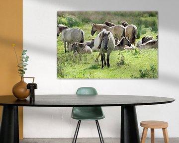 Koniks Pferde im Biesbosch von Judith Cool