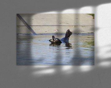 Robbenmutter allein von Leon Verra