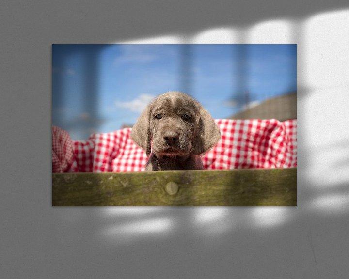 Sfeerimpressie: Pup in de kist van Mogi Hondenfotografie