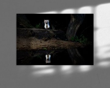 Steinmarder bei Nacht von Ed Klungers