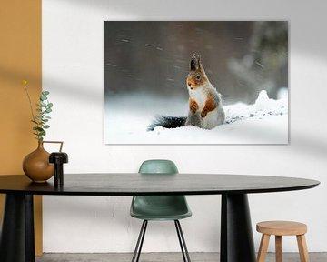 Eichhörnchen im Schnee von Ed Klungers
