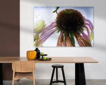 Echinacea in ijs 3 van Marc Heiligenstein