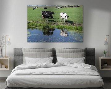 Oude koeien in de sloot of uit de sloot? van Monique Meijer