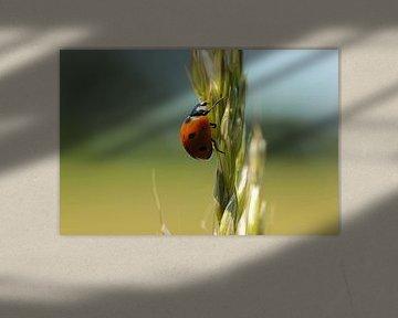 Lieveheersbeestje van Martijn Buitenkamp