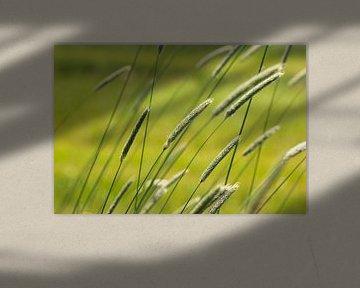 Grashalme im Wind von Martijn Buitenkamp