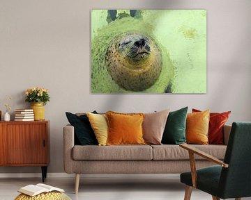 Zeehond in Ecomare van Christel Smits