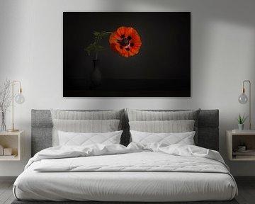 Rode klaproos in het zwart van Elles Rijsdijk