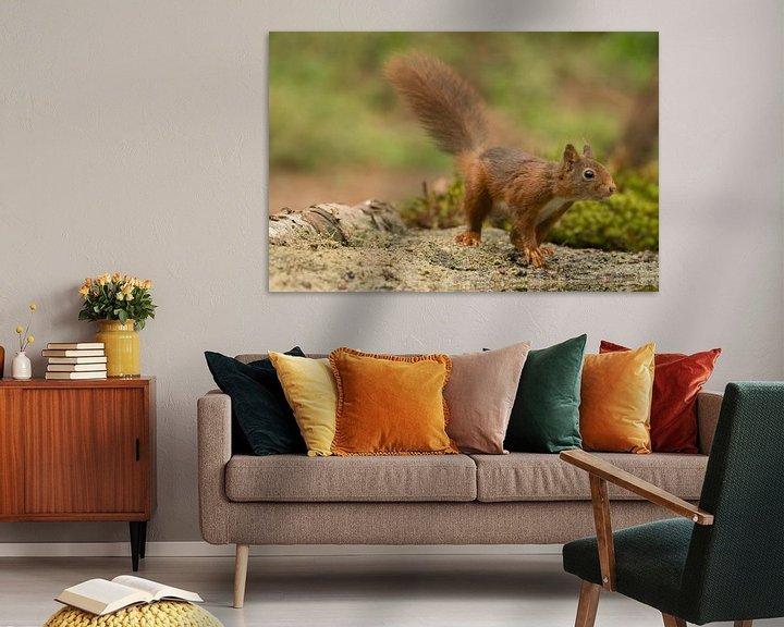 Beispiel: Eichhörnchen im Wald von Ingrid Ronde