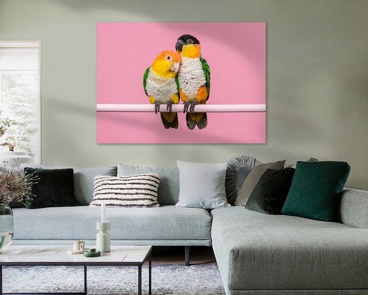Beispiel: Kaique-Papageien von Elles Rijsdijk