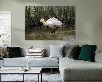 Löffelchen im Wasser auf Texel von Leon Verra