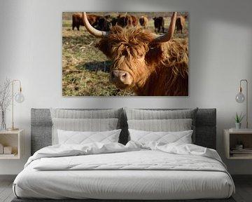 Ein Galloway Rind mit seiner Herde von Ulrike Leone