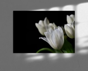 Weiße Tulpen vor dunklem Hintergrund von Ulrike Leone
