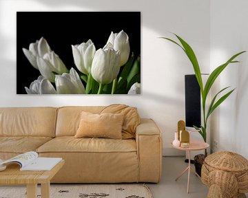 Weiße Tulpen blühen vor schwarzem Hintergrund von Ulrike Leone